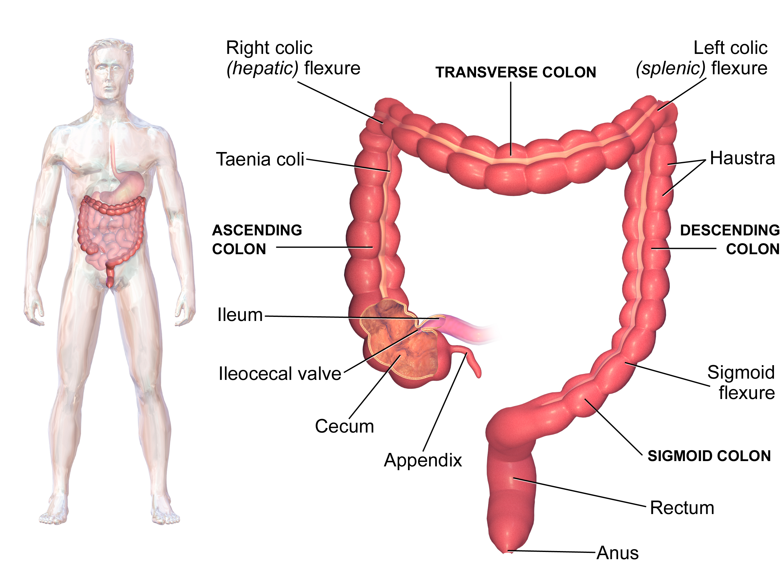 Welche Tabletten für die Prophylaxe der Würmer für den Kater